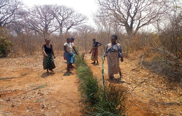 Planting a bio fence along the Creatives Village's land boundary to protect crops from cattle, goats and elephants, Livingstone, Zambia, August, 2020. (Wayi Wayi Creatives Village Fundraiser 0)